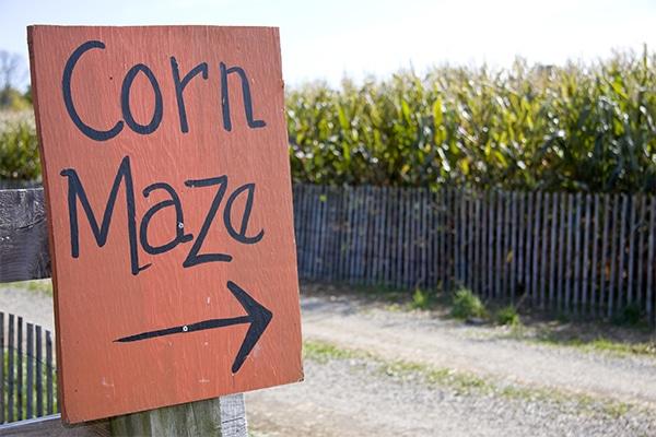 How to Make a Corn Maze