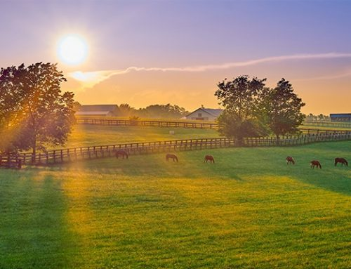 How to Maintain Horse Pasture Fences & More With Your Tractor
