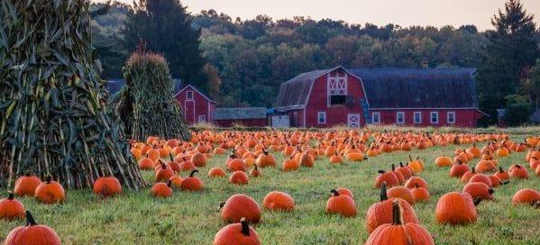 diy halloween barn